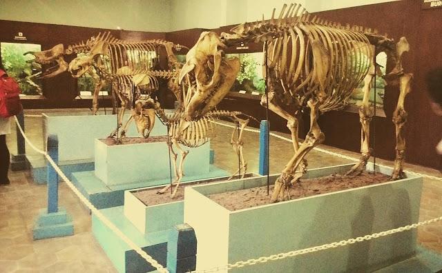 foto hewan di museum zoologi