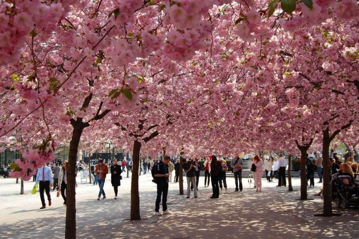 7. Stockholm, Sweden - Top 10 Blooming Cities in Spring