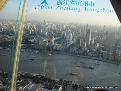 The Oriental Pearl Tower - 东方明珠塔 - Vista desde la torre