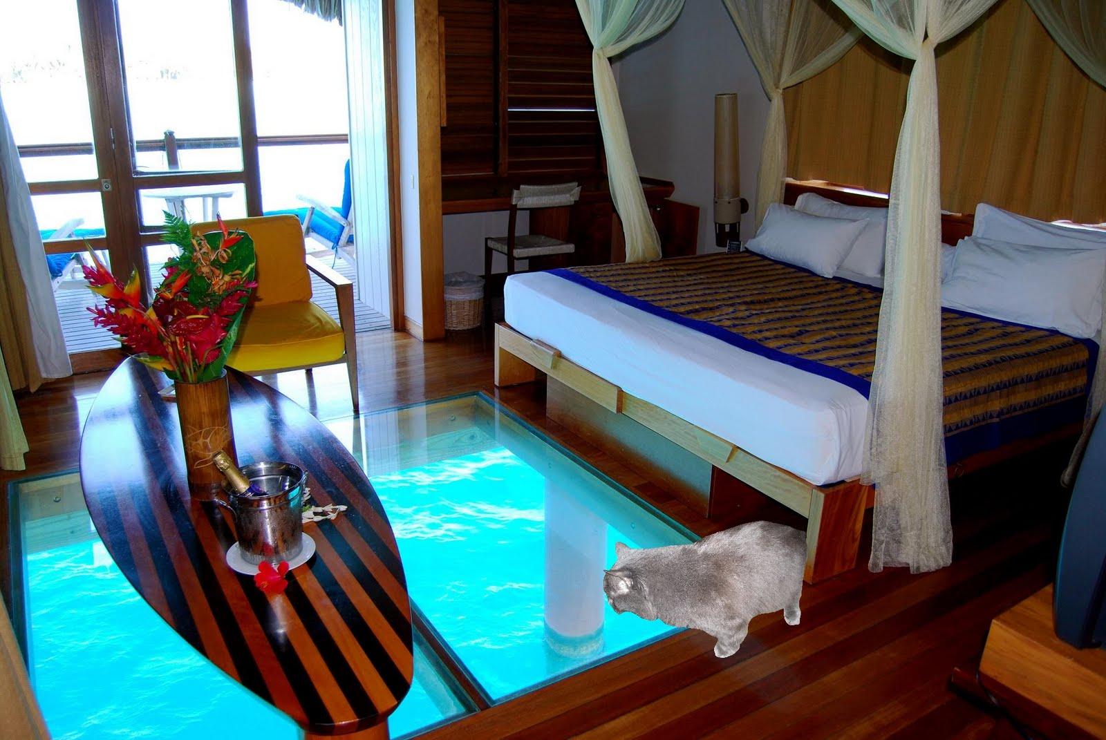 Celestial Kitties Bora Bora Party