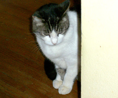 Miss Peepers, missing cat returns