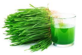 فوائد نبات عشب القمح