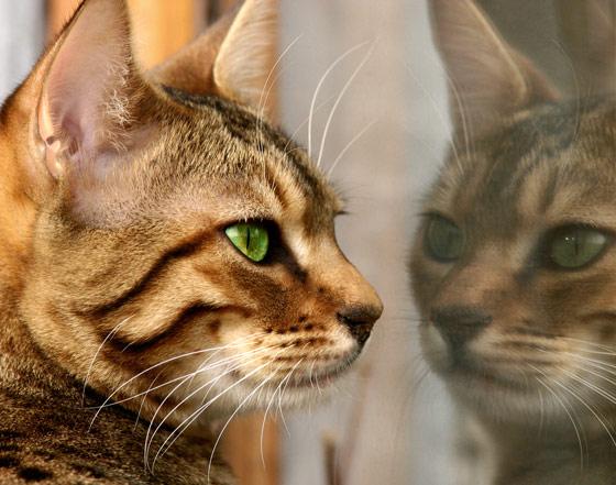 b5bf585b0 Os gatos vivem partes neste mudo e fora dele (no filme Constantine tem um  trecho que fala sobre isso), os gatos pretos são muito mais resistentes do  que os ...