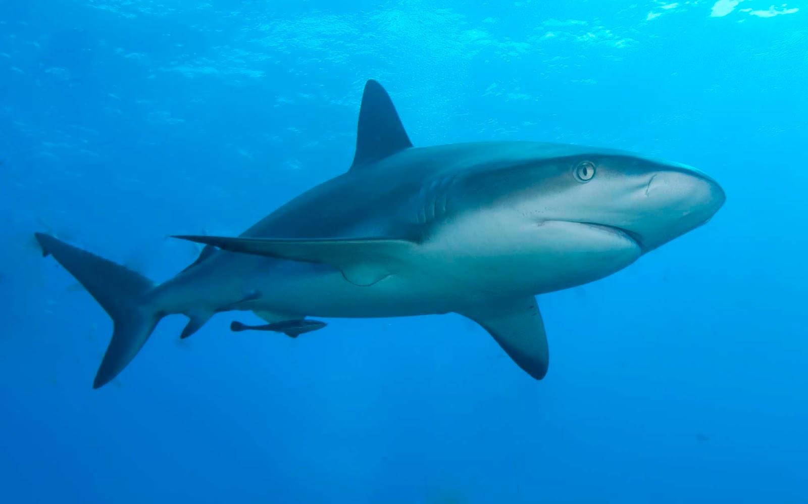 Dwa filmy o rekinach: <i>Podwodne życie ze Stevem Zissou</i> (2004) oraz <i>Orzeł kontra rekin</i> (2007)