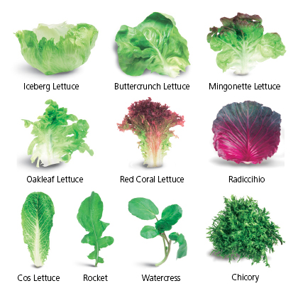 salat typer