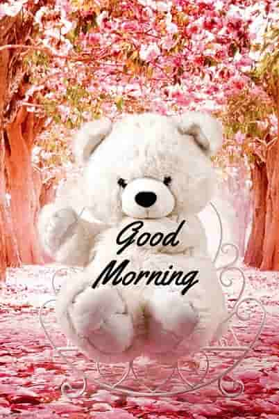 good morning teddy bear wallpaper