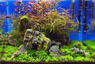 Fertőtlenítés akvárium
