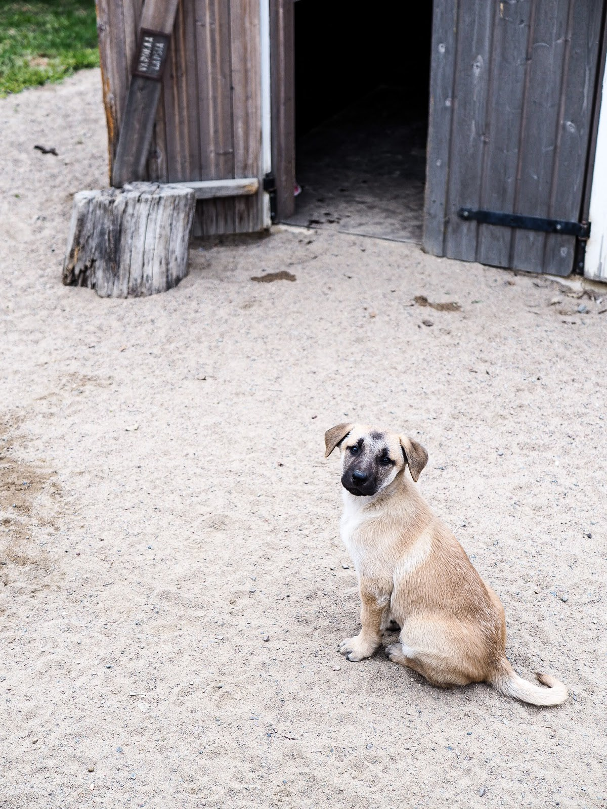 Koiramäen eläinpuistossa on ihania koiranpentuja!