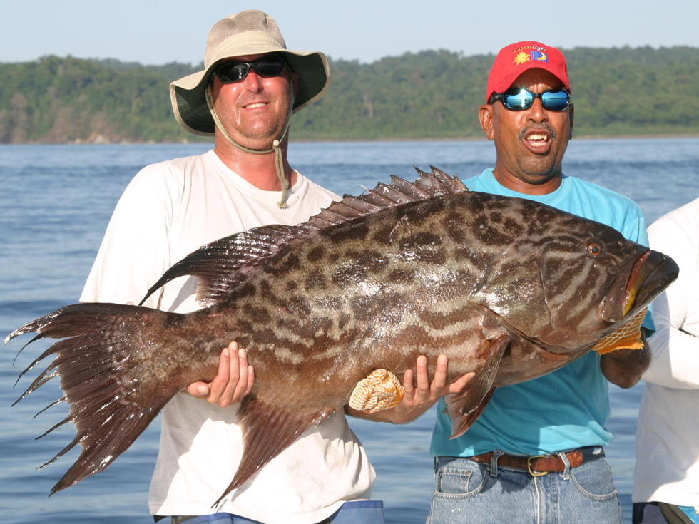 Big Fishes of the World: GROUPER BROOMTAIL (Mycteroperca ...