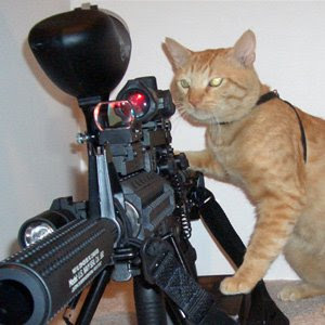 And now just to brighten your day a bit an eagle - Pictures of funny animals with guns ...