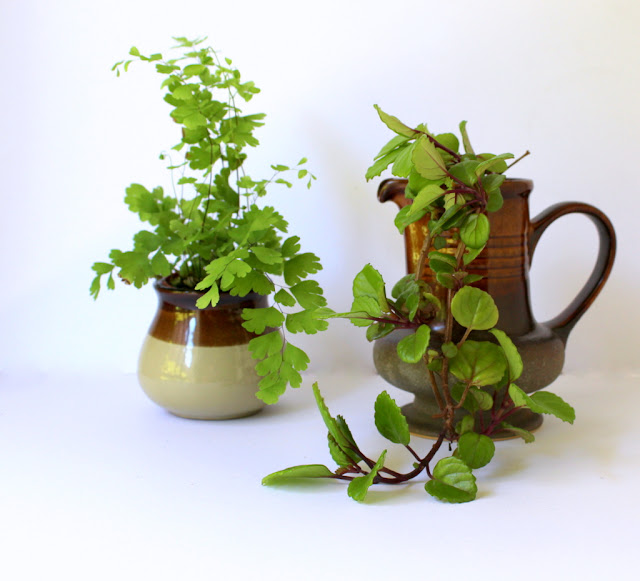 Indoor plants in brown  vintage pottery