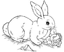 Bunny Rabbit Printable Coloring Sheet Animals
