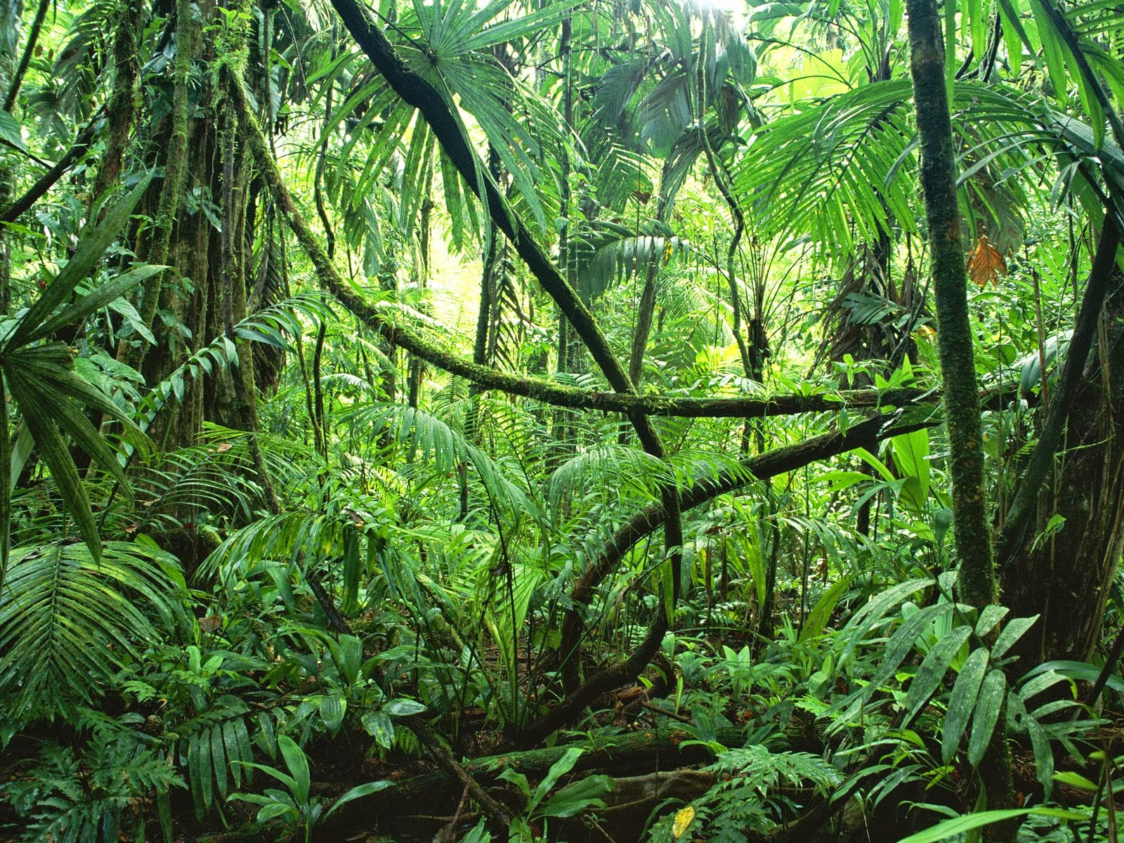Tropical Rainforests - Green Plants On The EarthTropical Rainforest Sunlight