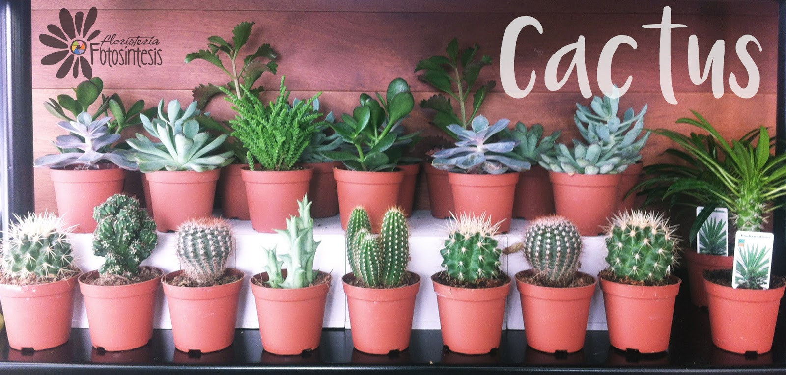 Cactus florister a fotos ntesis - Composiciones de cactus ...