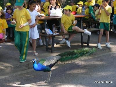 zoo-barcelona-copii-hranind-paunii