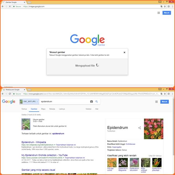 Hasil penelusuran SGFI dari upload file bukan dari URL gambar.