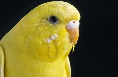 Kisaran Harga Saat Ini Pakan Lolohan Burung Parkit Anakan Terbaru Dan Terlengkap