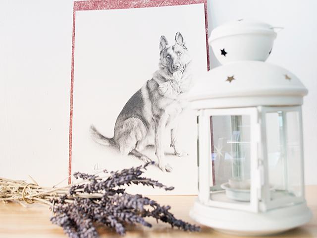 Retrato de mascotas para Milowcostblog