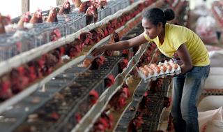 5 Contoh Ternak Menguntungkan Bermodal Kecil