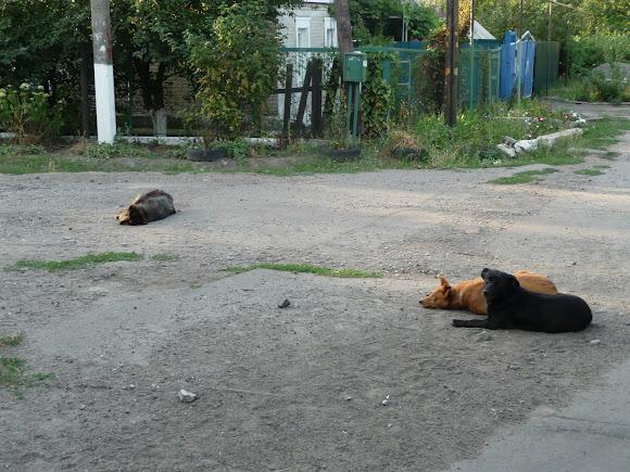Авдеевка. Переулок Клубный и собаки на дороге