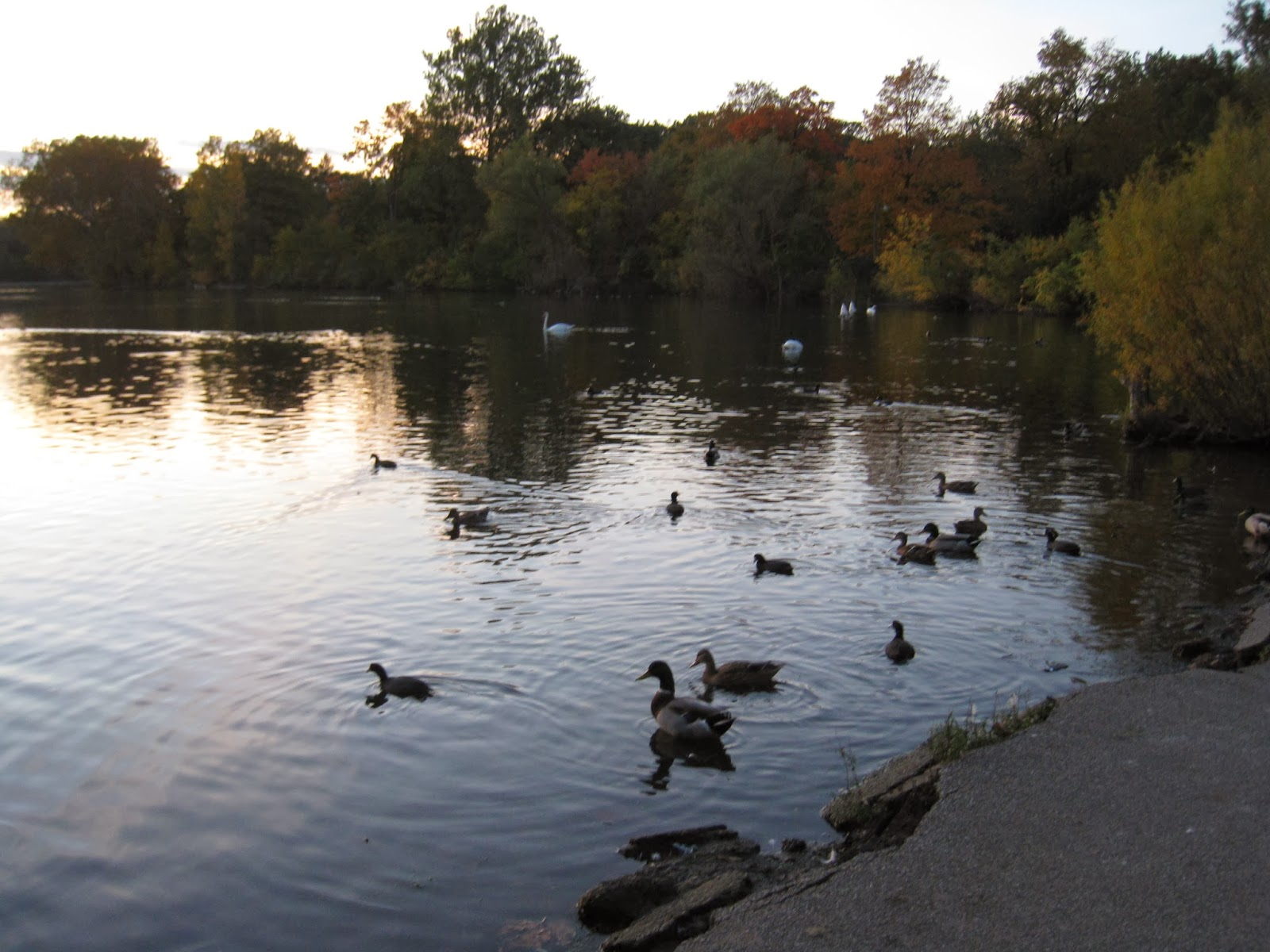 The Curious Zephyr: Favorite Runs: Notre Dame Lakes