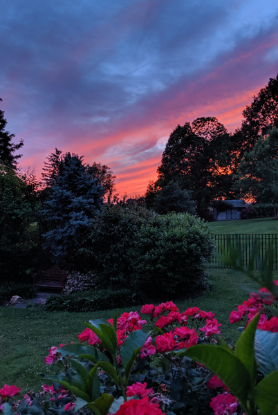 image of a sunset with a bright pink and orange sky over part of my and part of my neighbor's gardens