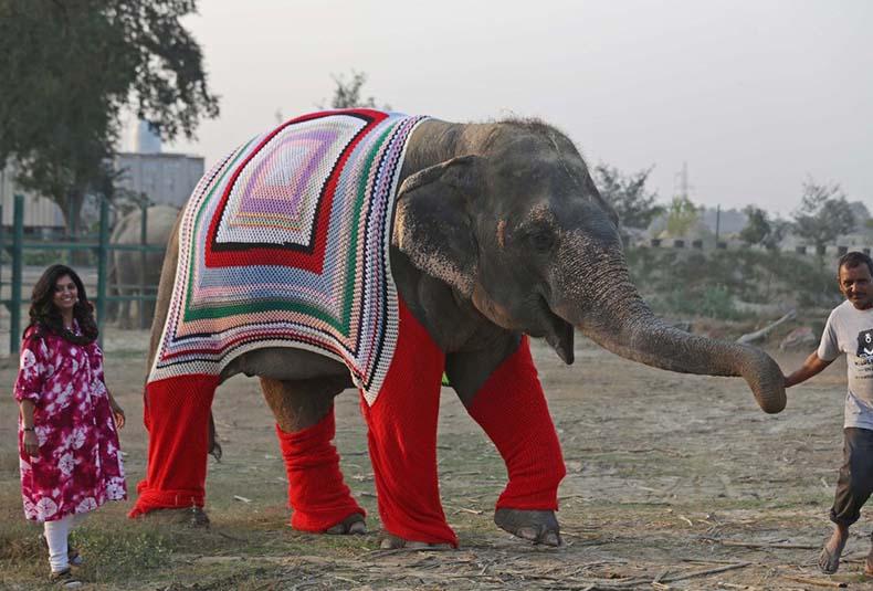 La gente está tejiendo suéteres gigantes para los elefantes para mantenerlos cómodos durante el Frente Frío de la India