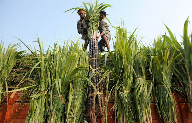 Southern India is preparing for the annual harvest festival.