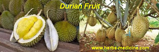 benefit of Durian for beauty plus
