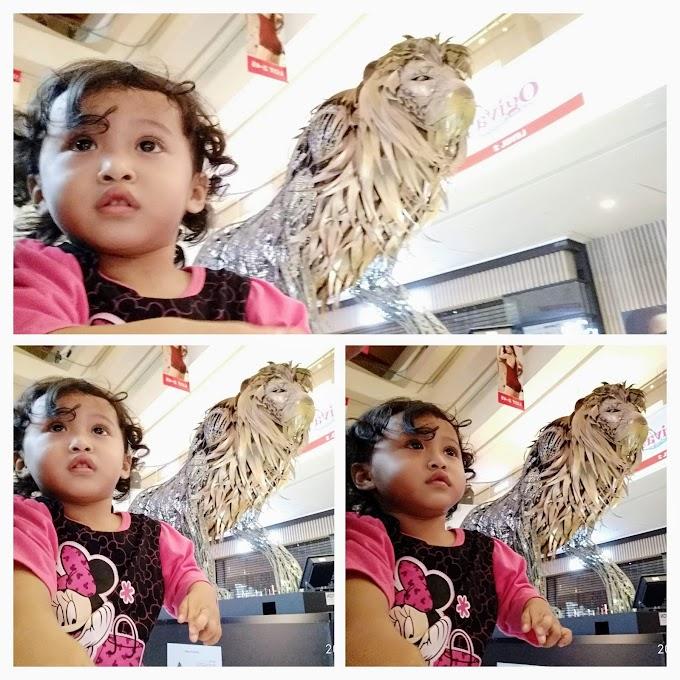 Aina dan Singa