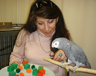 Grey Parrot called Alex