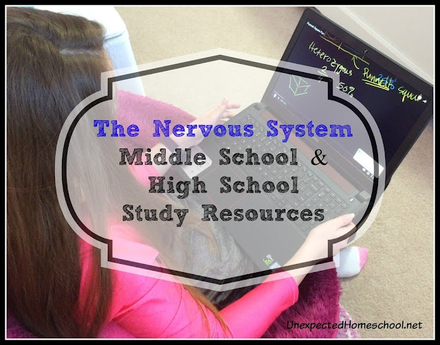 The Nervous System - Middle school and high school study resources.