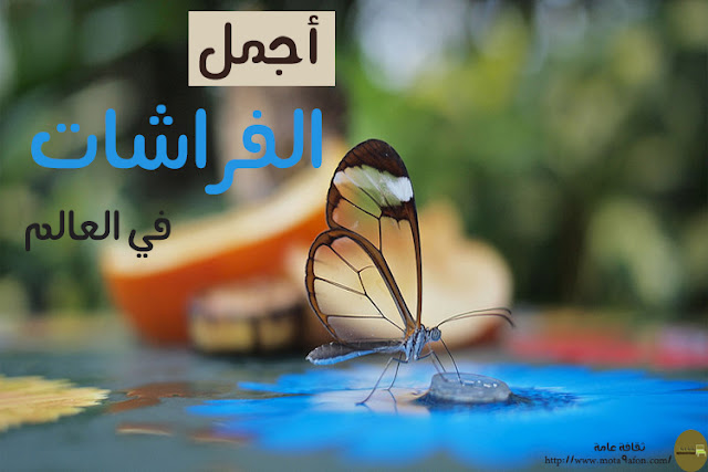 اجمل الفراشات