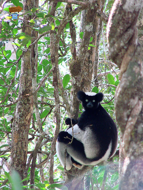 Madagascar: Maromizaha