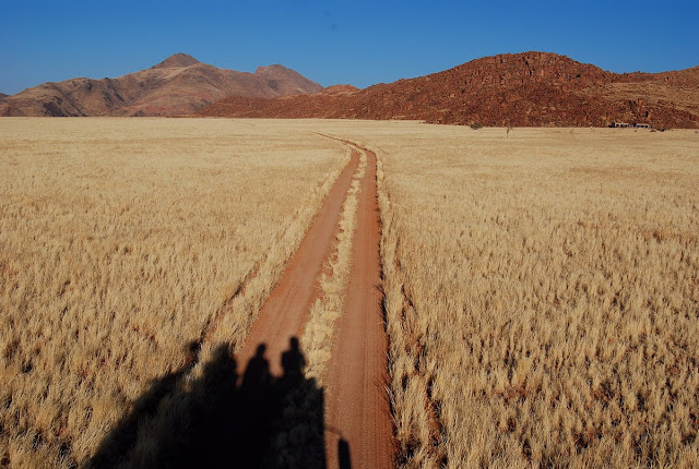la savane dorée du Namib