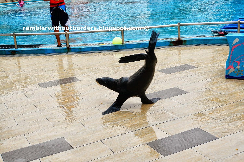 Seal show, Underwater World, Sentosa, Singapore