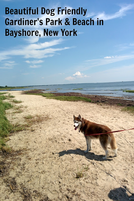 Dog friendly Gardiner park and Beach is a great place to take your dog on a fun adventure.  #dogfriendlbeach #dogfriendlypark #dogs