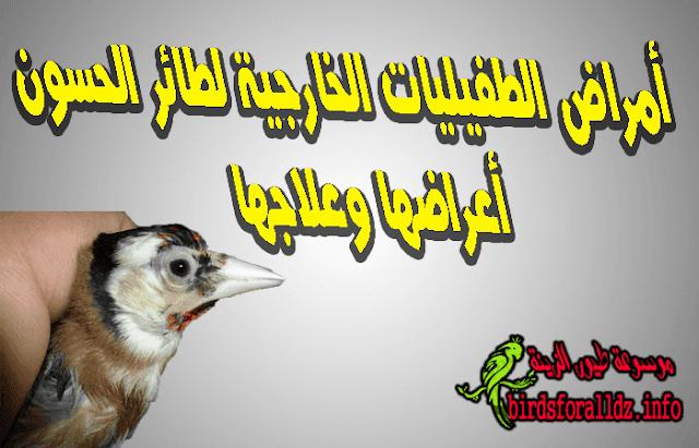 امراض الطفيليات الخارجية عند طائر الحسون وعلاجها