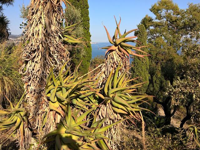 Panorama con Aloe