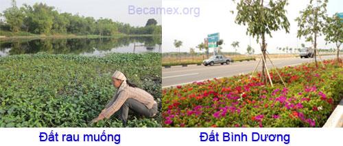 dat-Binh-Duong-gia-re