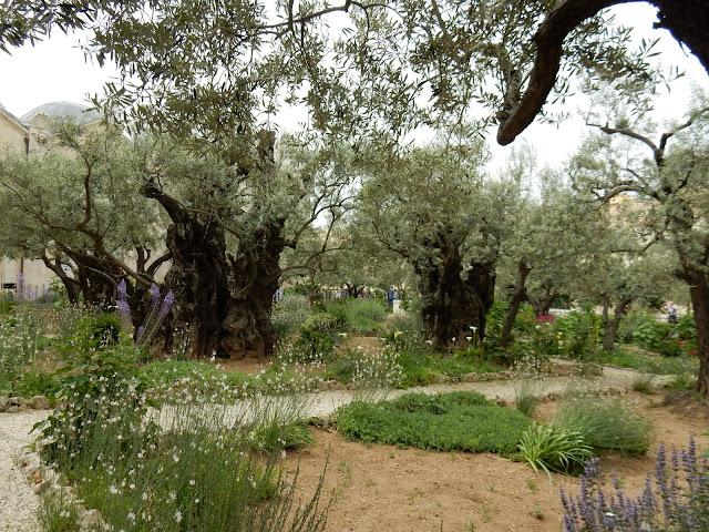 Getsemaní, Jerusalem, Israel, Elisa N, Blog de Viajes