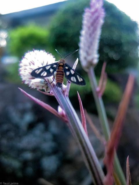 Foto Makro kupu-kupu
