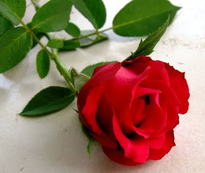 free lagu sekuntum mawar merah