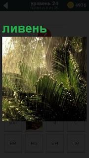 Изображение сильного тропического ливня, который своей водой моет крупные листы папортника