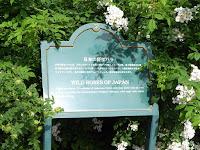 日本の野生バラ イノバラ