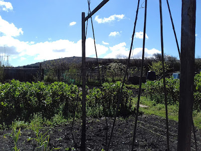 Sunday On The Allotment - Sowing and Growing