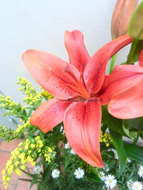 Fleur de lys rouge