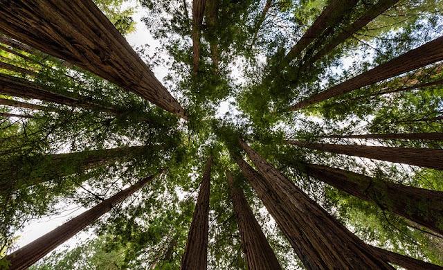 Informações sobre o Parque Nacional de Muirwoods na Califórnia