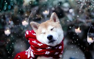 промокод iherb декабрь