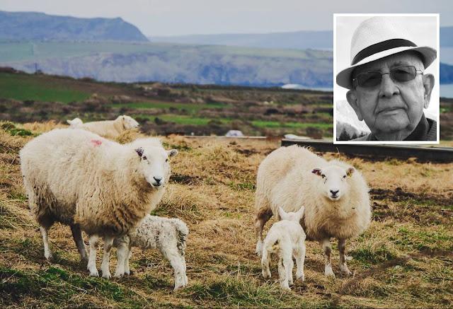 indiferenca ovelha autoajuda ambiente leitura carlos romero